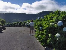 The Hydrangeas in Furnas are taller than my mom!