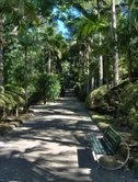 A pathway through Terra Nostra park, Furnas