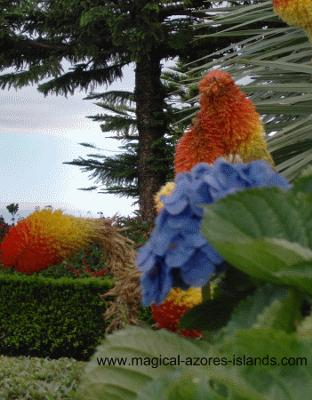 yellow and orange azores flowers